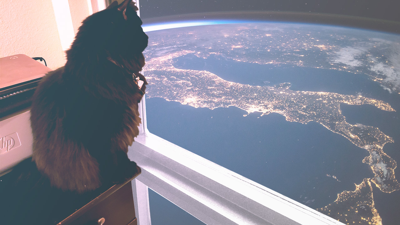 A cat staring out of a window looking upon Earth.