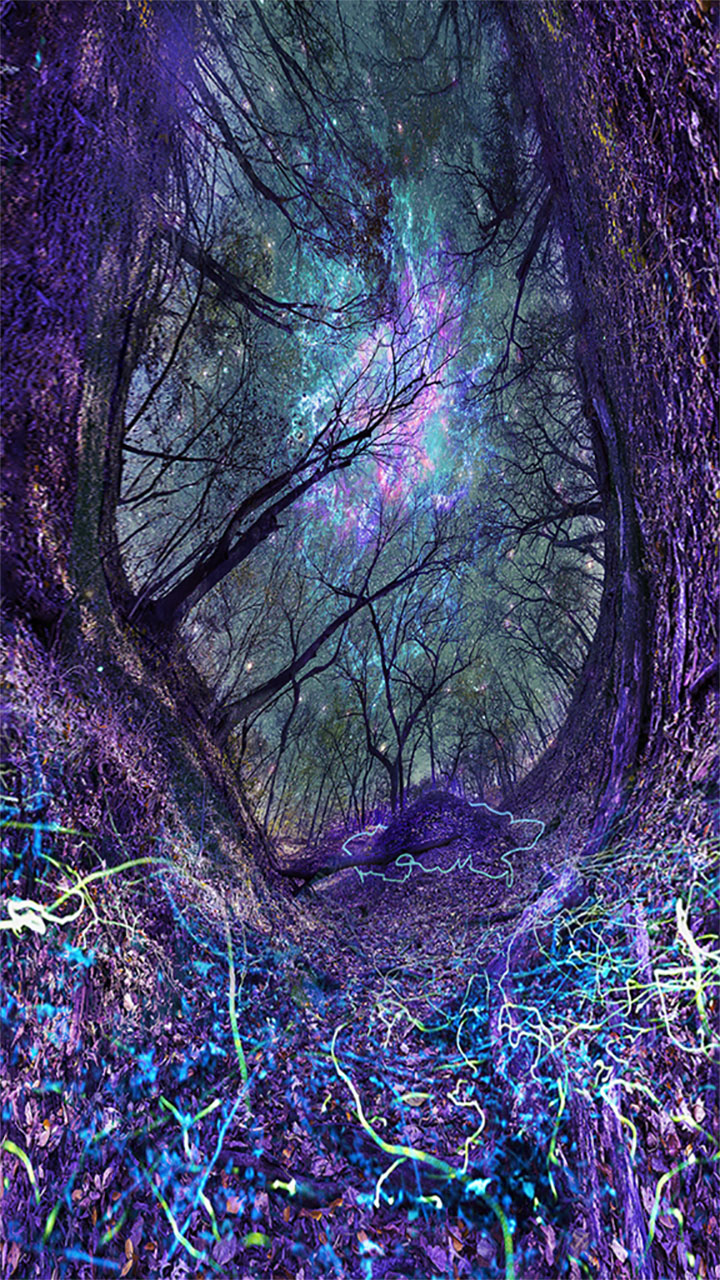 A panoramic forest with colorful lights.